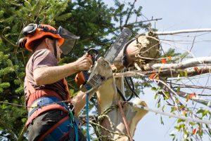 Arbor Care Services