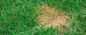 Turf Disease and Insect Control
