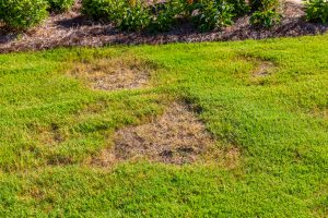 Lawn Disease & Insect Control