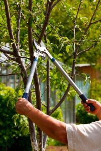 Tree Pruning and Removal