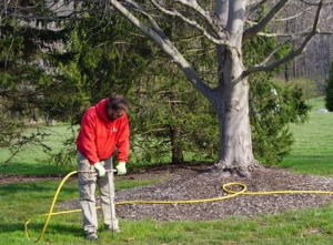 Tree Fertilization