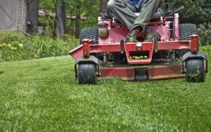 Lawn Care & Treatments